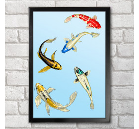 Koi Fish Poster Print A3+ 13 x 19 in - 33 x 48 cm Japanese Carp